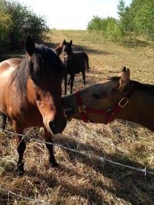 horselove-LMS