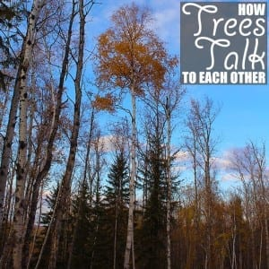 How Trees Talk to Each Other