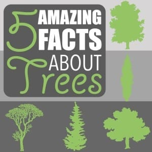 Amazing Facts About Trees by Of Houses and Trees | Five amazing facts about trees! Did you know a tree can be used as a compass, fight crime and increase bird biodiversity from zero to 80 species?