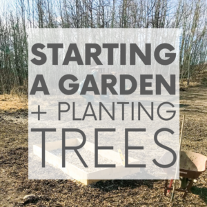 Starting a Garden | Our House in the Trees | Episode 8